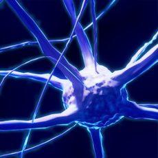I neuroscienziati utilizzano l'eye tracking negli studi sui processi fisiologici e sulla loro correlazione con le influenze cognitive ed emozionali
