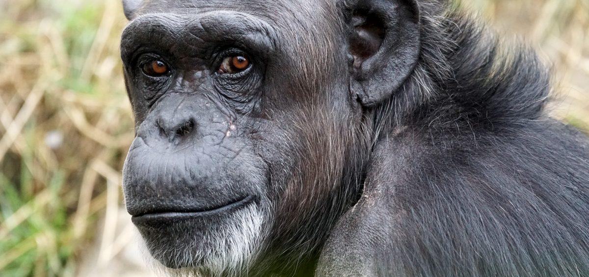 un grande primato ti guarda